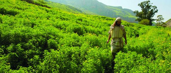 ODJ: God\'s garden – YMI