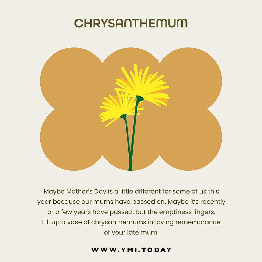 graphic image of chrysanthemum